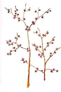 jilm-elm-BACHOVKY-BIORET