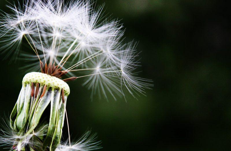 alergie-biorezonance-bioret